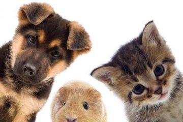 Busy do Niemiec i transport zwierząt domowych
